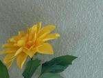 친구집에서 찍은 꽃 (4)